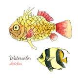 Croquis tropical de peinture de poissons de mer d'aquarelle Image libre de droits