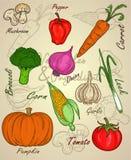 Croquis végétal ou ingrédient avec l'ensemble coloré Photo stock