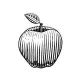 Croquis vectorisé d'encre d'Apple Photo stock