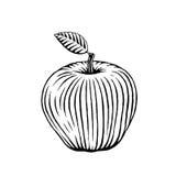 Croquis vectorisé d'encre d'Apple Images libres de droits