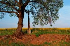 cross 4 drzewo. Zdjęcie Royalty Free