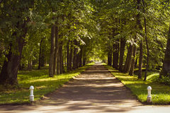Cross alley in Oranienbaum. LOMONOSOV, RUSSIA - AUGUST 20, 2014: Cross alley in the Palace and Park ensemble of Oranienbaum in Lomonosov, Russia Stock Image