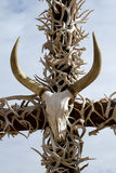 Cross of antlers and a skull Royalty Free Stock Image