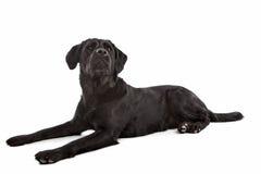 Cross breed dog Stock Photo