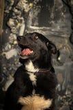 Cross breed dog Stock Photography