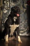 Cross breed dog Stock Image