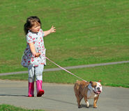 Cross breed dog danger concept