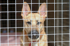 Cross-breed dog. In kennel at Dog Rescue Centre Stock Images