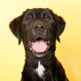 Cross breed dog portrait Stock Image