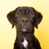 Cross breed dog portrait Stock Photo