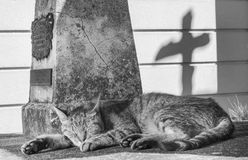 Cross cat stock photo