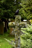 Cross, cemetery, black bird. Cross beautiful composition with sitting black bird on it, cemetery, bird, cross old moss-covered, religion, christianity, passing Royalty Free Stock Images