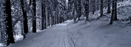 Cross Country-Bahn im Wald am Wintertageslicht Lizenzfreies Stockfoto