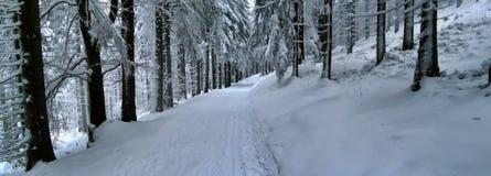 Cross Country-Bahn im Wald am Wintertageslicht Stockfotografie