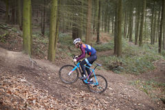 Cross-country cyclist ascending a slope in a forest Royalty Free Stock Photography