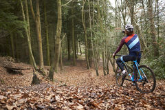 Cross-country cyclist drinking as he cycles in a forest Royalty Free Stock Photos