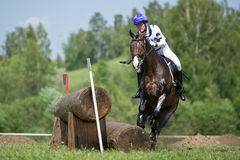 Cross-country Disobedience (horse sudden stop) Stock Photos