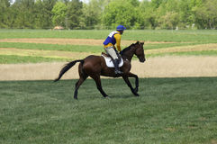 Cross Country Horse Race. A horse and rider competing in a race stock images