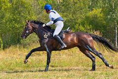 Cross-Country, horseback gallop Royalty Free Stock Images