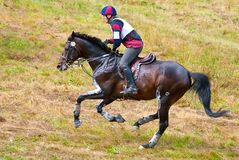 Cross-Country, horseback gallop Royalty Free Stock Photography
