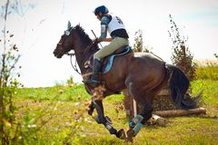 Cross-Country, horseback gallop Stock Image