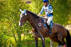 Cross-Country, horseback jumping Royalty Free Stock Image