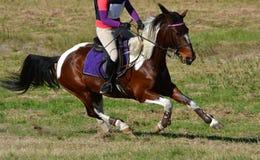 Cross Country-Pferd Stockbild