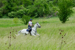 Cross Country-Pferderennen Stockfoto