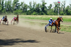 Cross-country race trotters Stock Photography