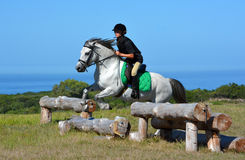 Cross country girl and pony jumping. A female Caucasian preteen rider jumping a bank with her gray Welsh pony on a cross country course Stock Photo
