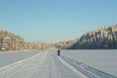 Cross Country ski. Cross-country ski track in Arctic wilderness Royalty Free Stock Images