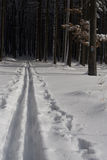Cross-country ski path. Going trough the forest Royalty Free Stock Photography