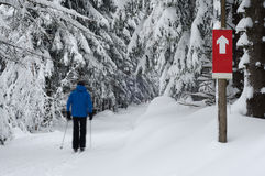 Cross Country Ski Runner - Motion Blur Royalty Free Stock Photo
