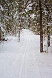 Cross-country ski track Royalty Free Stock Photography