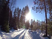 Cross country ski track stock video footage