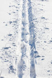 Cross country ski tracks. In soft snow royalty free stock photos
