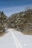 Cross country ski trail. Single cross country ski trail through pine trees in fresh snow Stock Photo