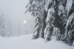 Cypress Mountain cross country ski trail Royalty Free Stock Photos