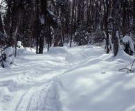 Cross Country Ski Trail Ontario Canada. Cross country ski trail winds its way through the Ontario woods. 6x7 Kodachrome drum scan royalty free stock image