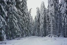 Cross-country ski trail in snowy forest royalty free stock photography