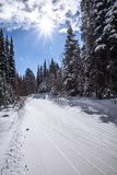 Cross-country ski trail, trees, blue sky and starburst sun stock image