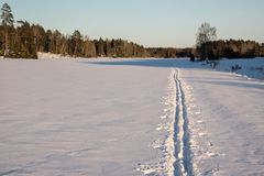 Cross country ski trails on a field. Tour skiing. Stock Photo