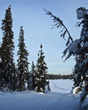 Ski Trails Royalty Free Stock Images