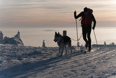 Cross-country skier with dog. International dogsled race Sedivace's long in Orlicke Hill. Traditional sleddog race in Czech Republic. Sedivacek's long sleddog Royalty Free Stock Photos