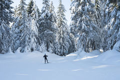 Cross country skier with snow covered trees Stock Photography