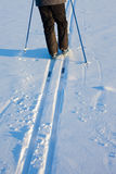 Cross-Country Skier in Tracks Stock Photography