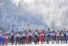 Cross country skiers runners stand by at start of race in beautiful winter landscape Royalty Free Stock Photo