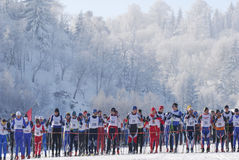 Cross country skiers running in forest Royalty Free Stock Photos