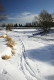 Cross-Country Skiing 1. On a beautiful winter day, a narrow path is left by a single cross-country skier Stock Photography