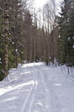 Cross Country Skiing Stock Photography